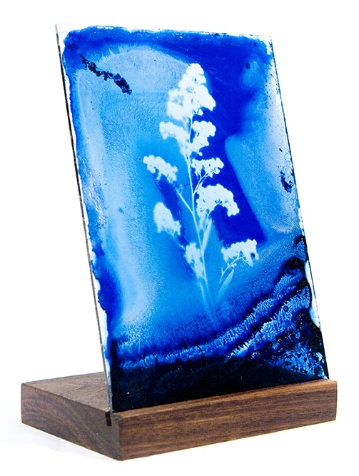 Luminaria Navidad: Table Top Botanical Cyanotype on Glass - Example of 1 of 3 Possible Gifts
