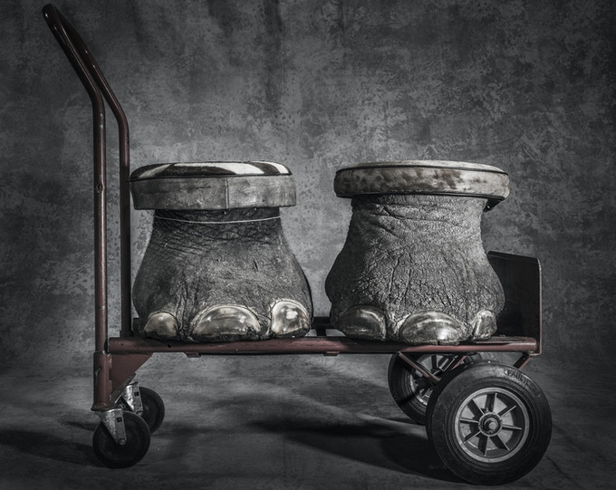 Elephants are wiped out to trade ivory and hideous trinkets. A pair of elephant feet made into stools, confiscated by the U.S. Fish and Wildlife Service. © Britta Jaschinski, 2016