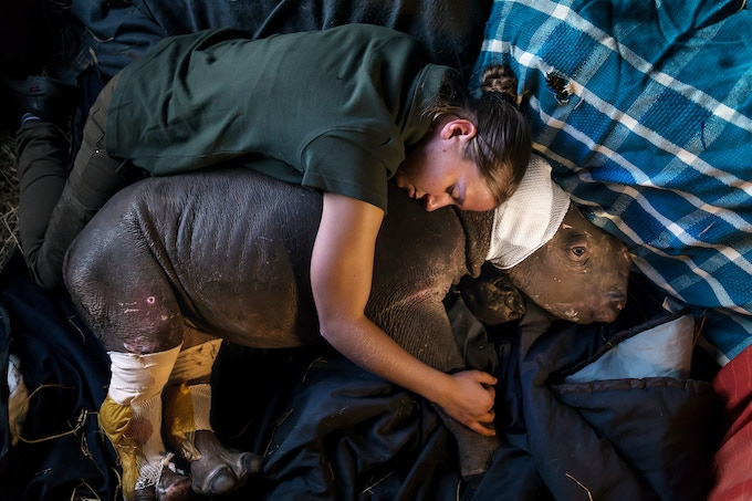 A 'Care for Wild Africa' volunteer comforts a rhino calf orphaned after its mother was killed by poachers. © Brent Stirton