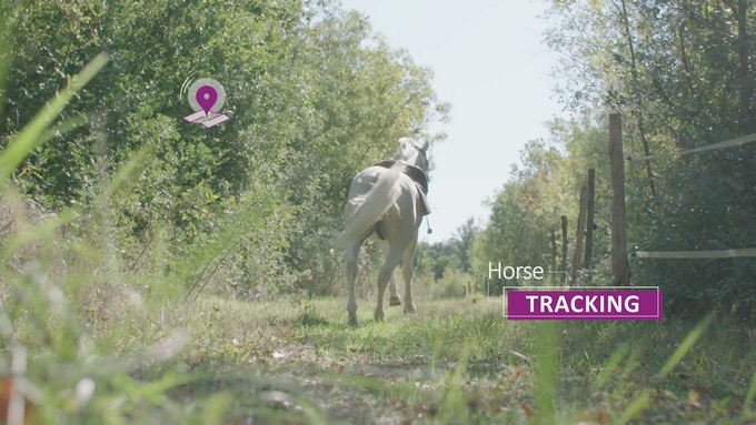 EQUISURE - the first connected alert system for horse ...