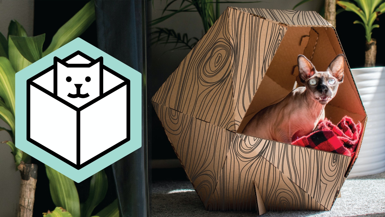Unique DIY pop up pet homes made from recyclable materials for your furry friends. Give your cat or dog a space of their own!