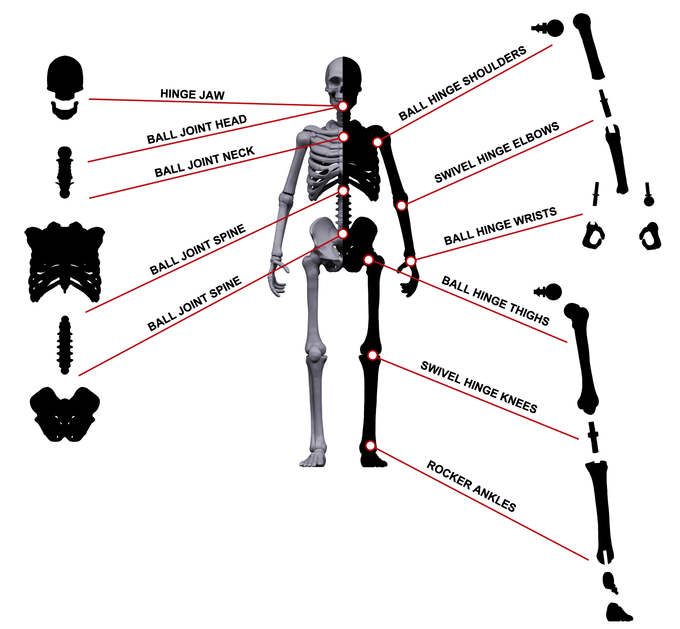 Breakdown of each point of articulation the Skeletons have