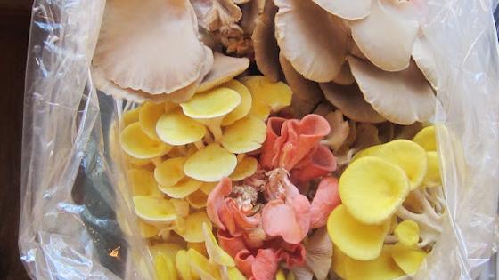 Capangill Farm Startup - Gourmet Mushrooms
