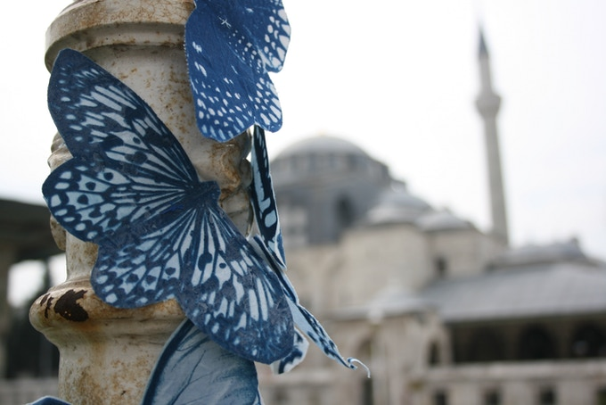 Butterflies in Istanbul, Turkey, April 2014.
