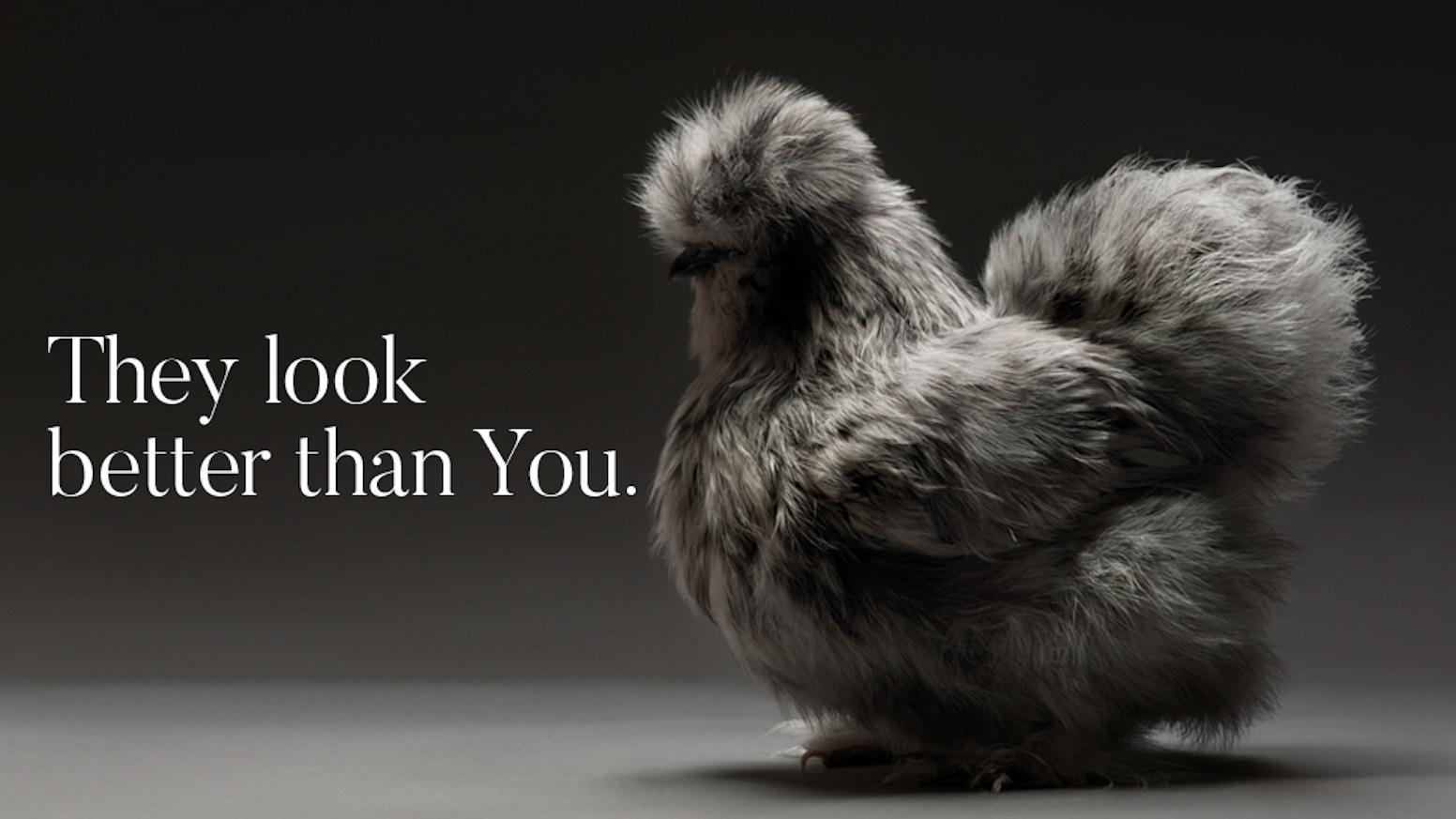 Chicken FAQ - FreeYellow