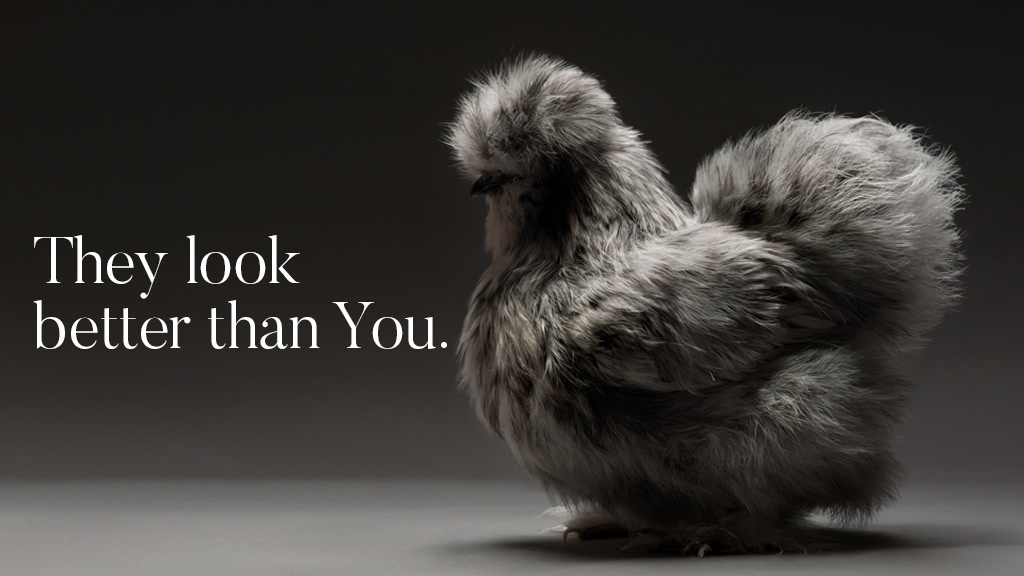 The Most Stunning High Quality Chicken Book Photos Ever Made Project Video Thumbnail