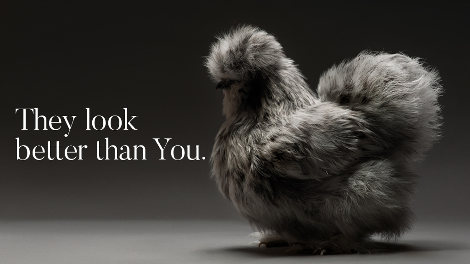 An inspiring coffee table book & beautiful high quality prints featuring sexy and beautiful chickens shot by two amazing photographers