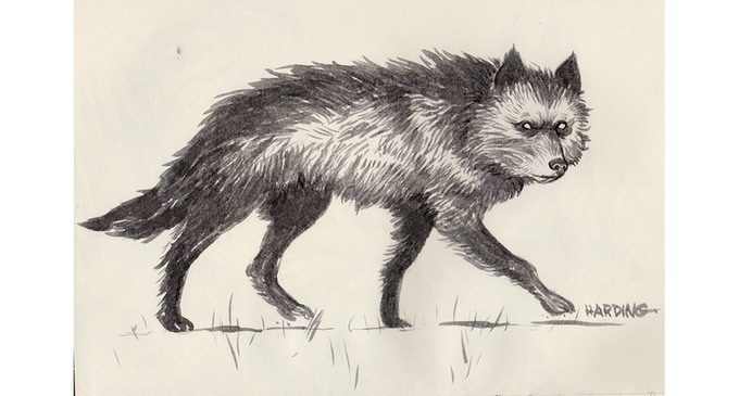 Concept sketch of Maria's wolf, Hrodulf, by Paul Harding