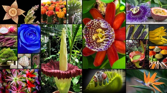 World's Most Spectacular Plants and How to Grow Them