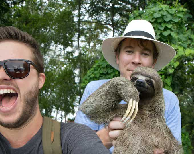 Heya internet, I hear you liked sloths...