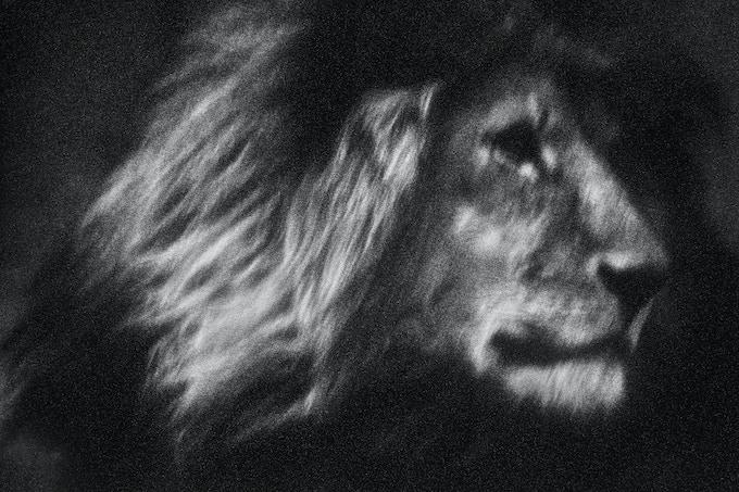 Three signed fine art 60 x 40 cm prints of Lone Lion, by Britta Jaschinski, European Wildlife Photographer of the Year 2017