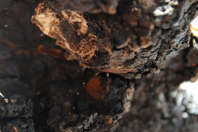 Polysaccharides extracted from Chaga fungus have found to be effective antioxidants, and their action mechanism has been verified.