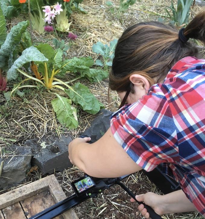 Evangeline LaRoque captures the garden with her keen sense of color