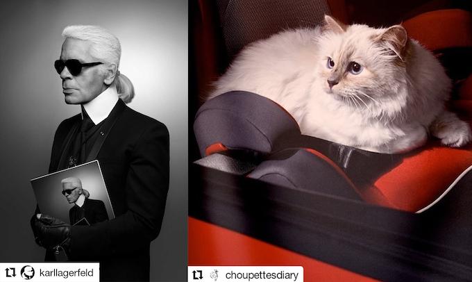 Karl & Choupette Lagerfeld