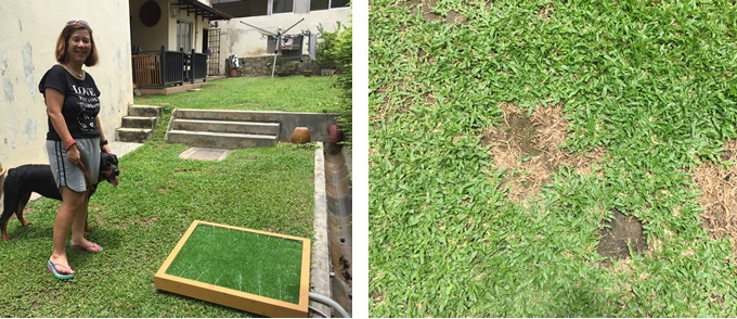 No more brown grass in your garden