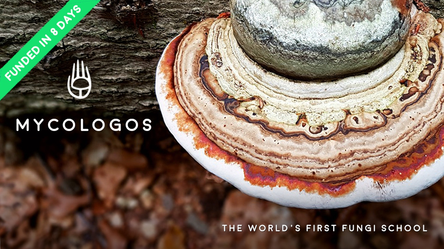 MYCOLOGOS: WORLD'S FIRST ONLINE MYCOLOGY (MUSHROOM) SCHOOL