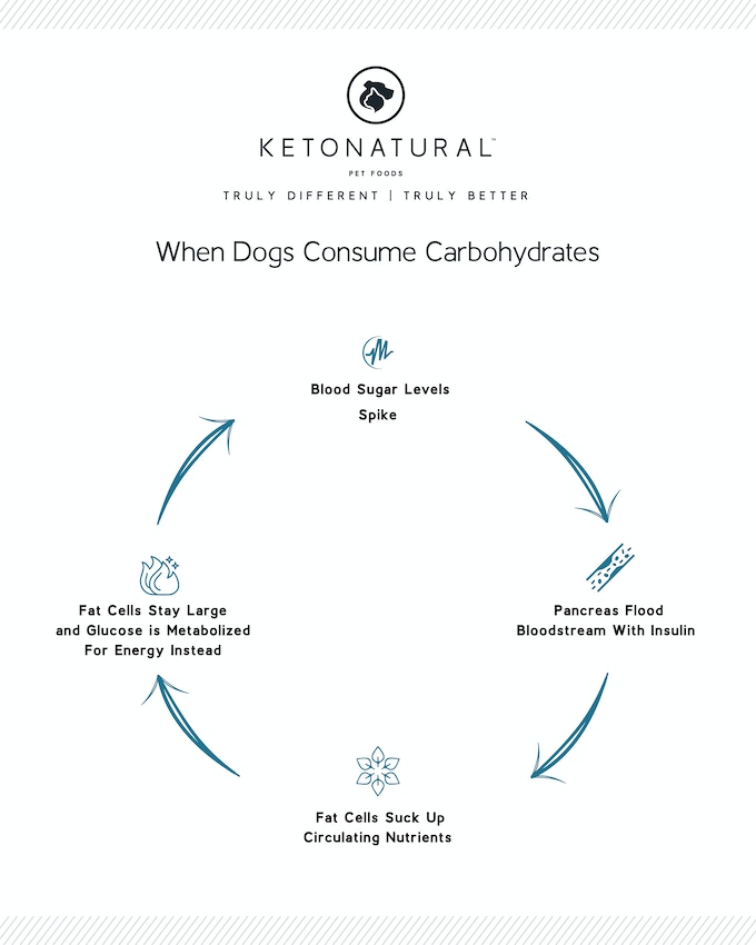 Ketona Dry Dog Food With Less Than 8 Carbohydrate By Ketonatural