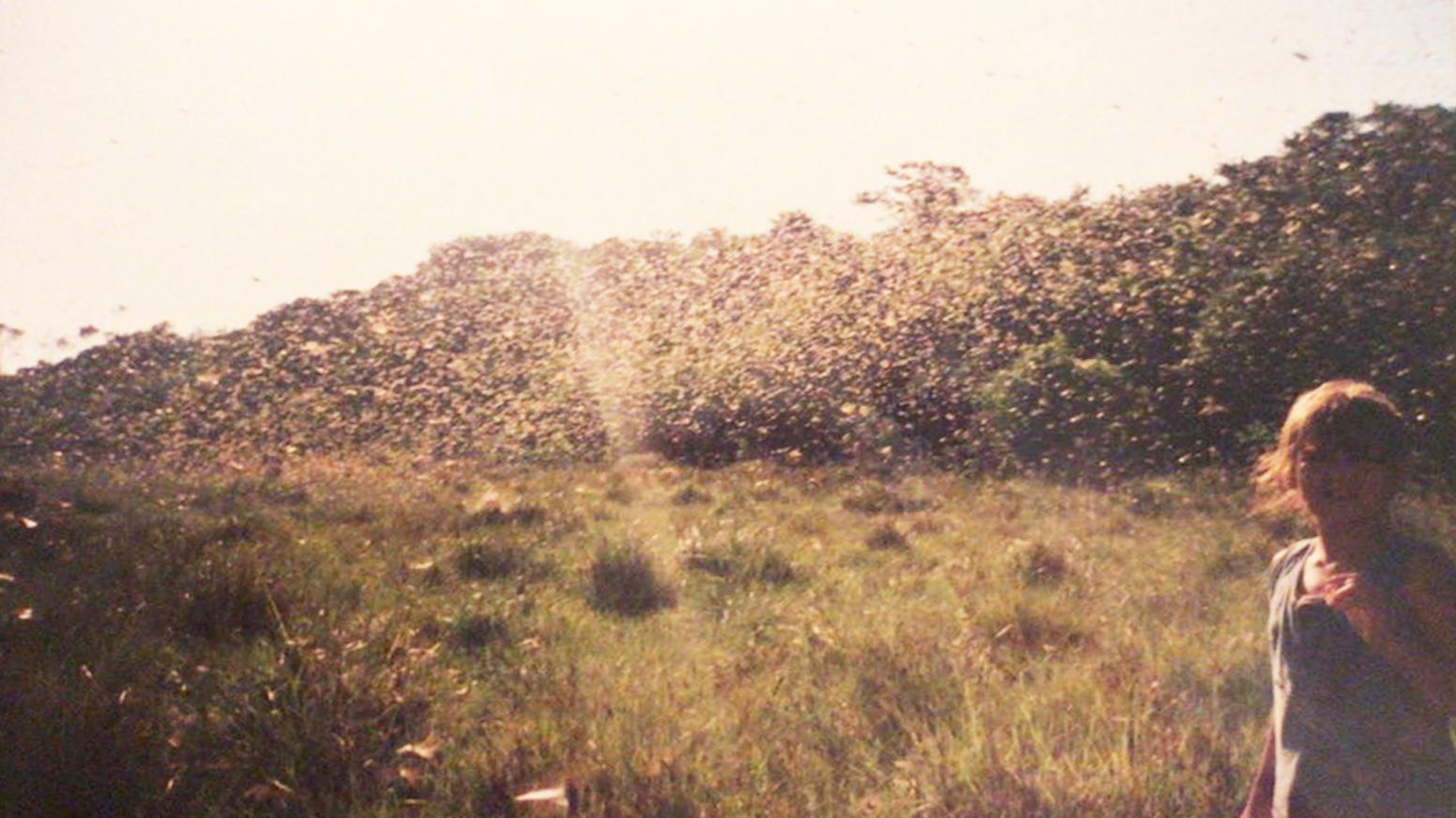 Sol del llano- Cortometraje
