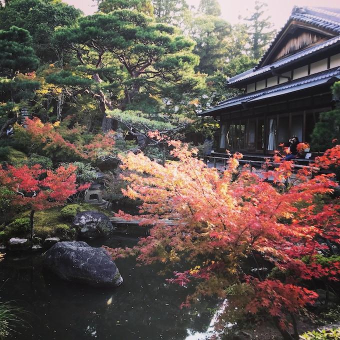 Beautiful gardens, Nara, Japan