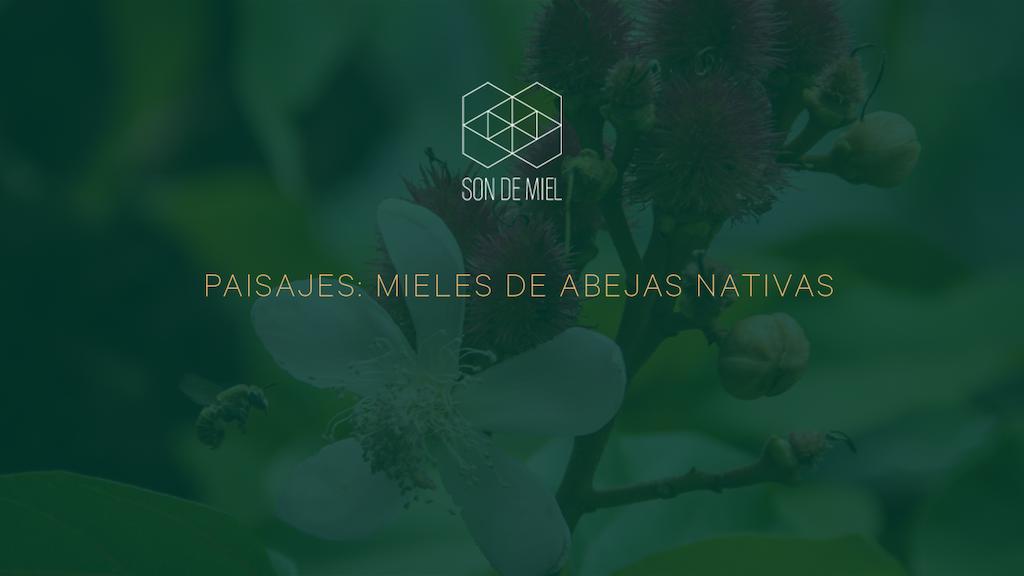Mexico Creates: mieles de abejas nativas project video thumbnail