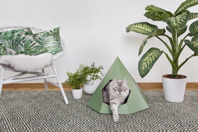 cat tipi green