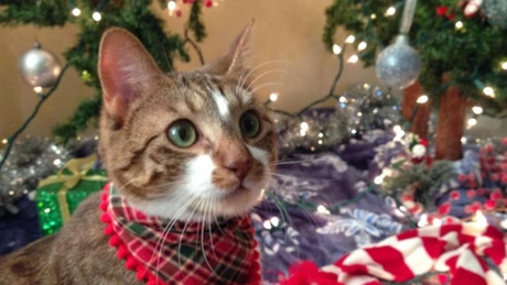 a full length christmas album where every song is performed entirely by meowing you - Believe Christmas Song