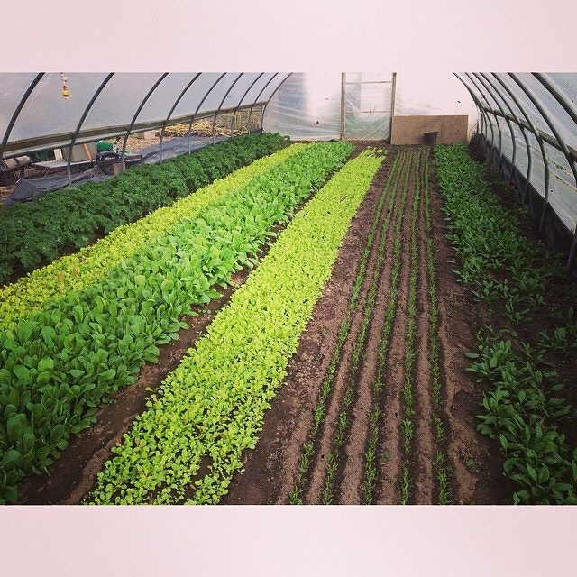 Green City Acres, owned by Curtis Stone, in Kelowna, BC