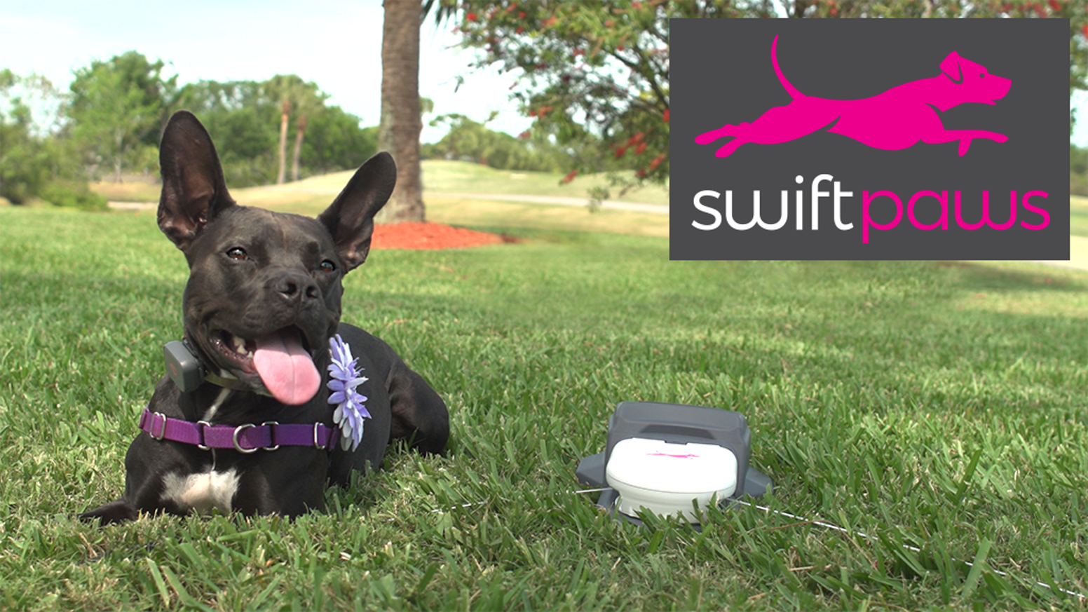 Swift Paws is an interactive pet toy for your best friend. Your dog (or cat) will love this exciting game of chase... and you will too!