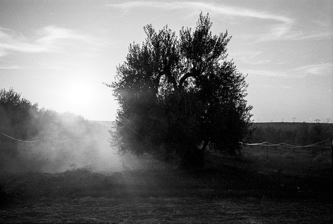 PICTURE N. 3 BY FEDERICO POSSATI - PLEDGE N. 5