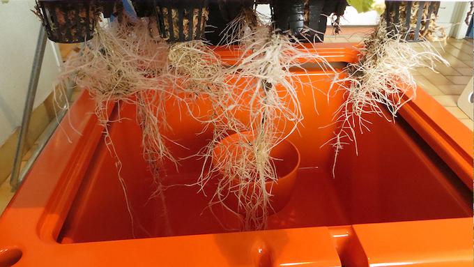 Obtenez une croissance exceptionnelle et des racines propres avec GUS®