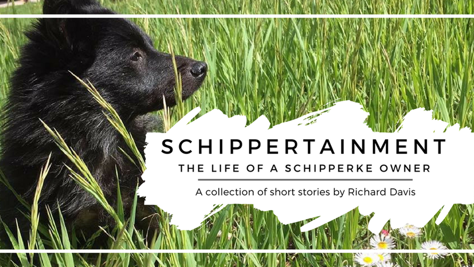 schippertainment the life of a schipperke owner by amy curran