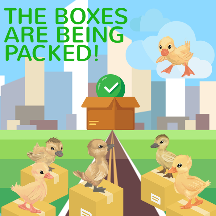 The Ducklings boxes are now being packed for shipping!