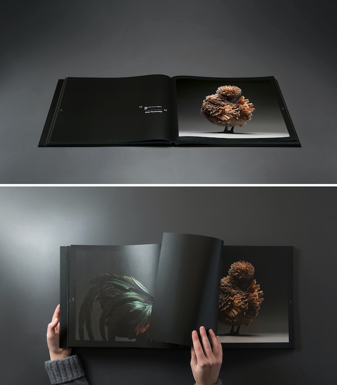 the most stunning high quality chicken book photos ever made by chicken kickstarter. Black Bedroom Furniture Sets. Home Design Ideas