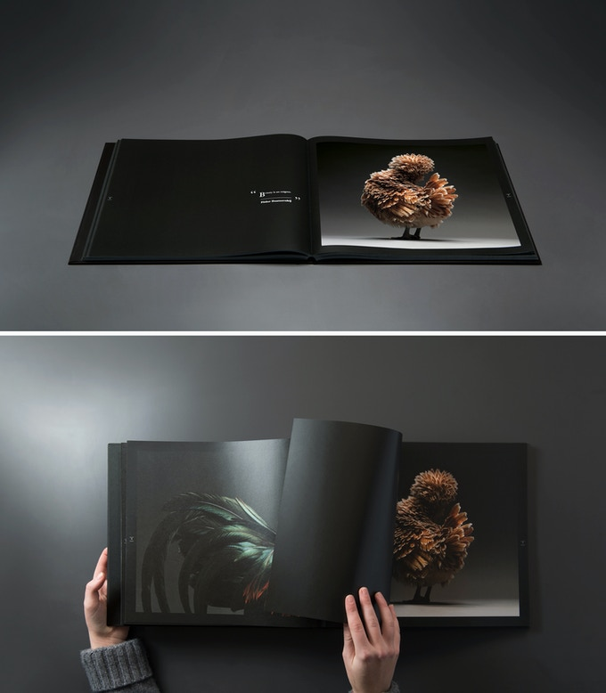 The Most Stunning High Quality Chicken Book Photos Ever