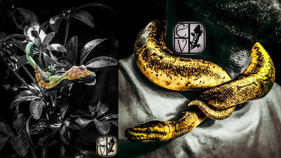 Exotic Vivaria - Reptilian Photo Art. Premium Canvas prints
