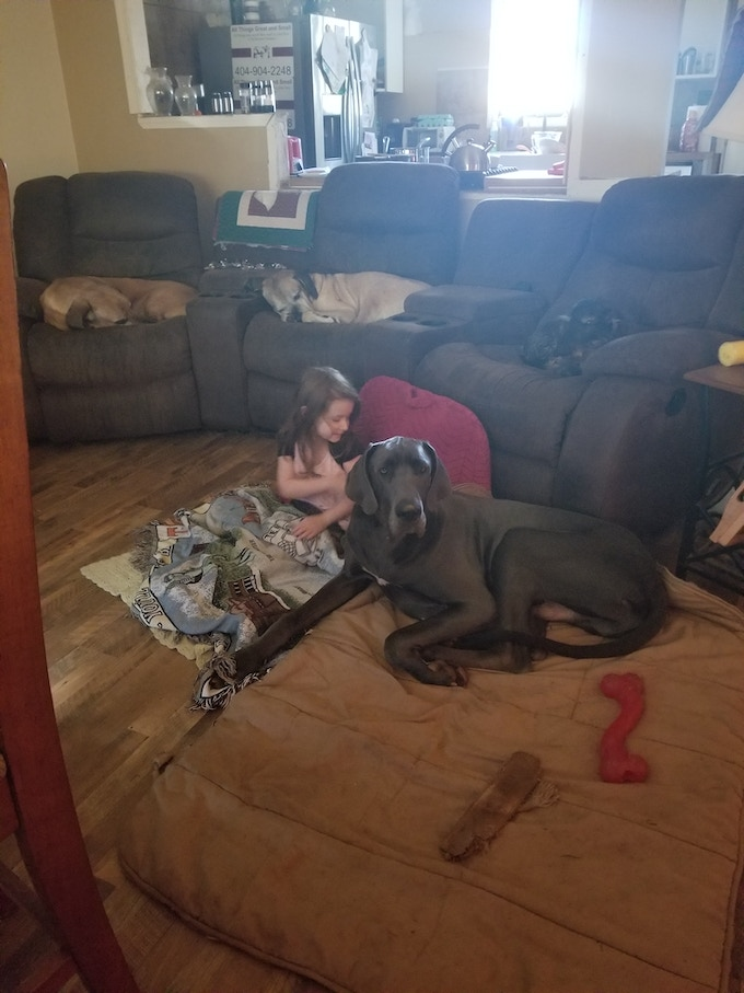 Pets are family. No two ways about it. In the chairs from left to right: Dozer, his mom Cynderella, and his dad Bailey. In the floor: our daughter Paula, and our fur son Rhyno