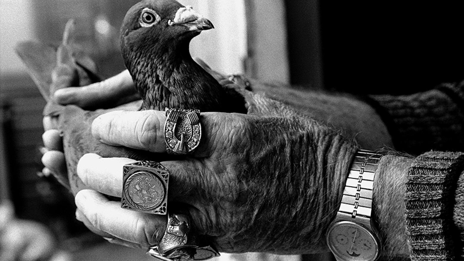 Birdmen by Colin Wilkinson (Bluecoat Press) — Kickstarter
