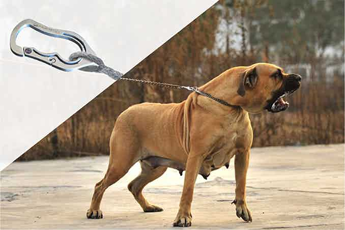 If you need to clip a giant dog in place, try the Bad Ass