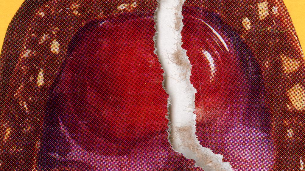 Miniature de la vidéo du projet Cherry Blossom - a photobook about unrequited queer love.
