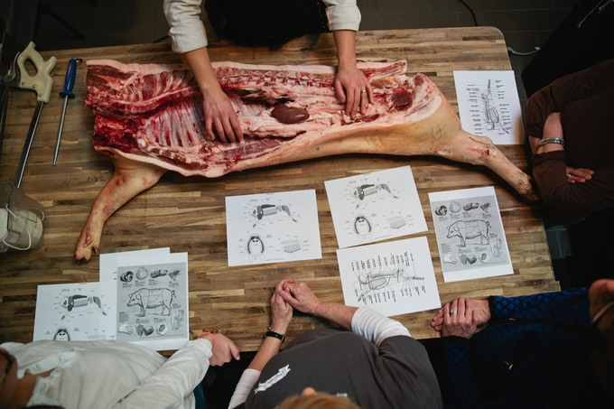 A whole hog butcher demo in action