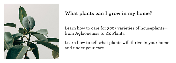 How to Make a Plant Love You: Houseplant Masterclass by