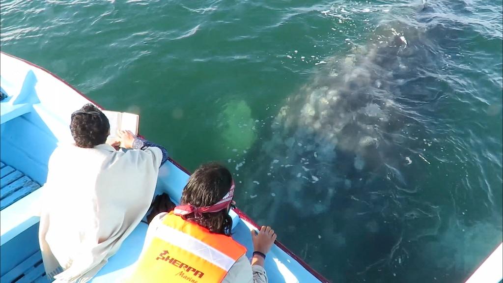 Poesía para ballenas project video thumbnail