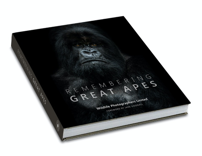Remembering Great Apes, cover image by Nelis Wolmarans