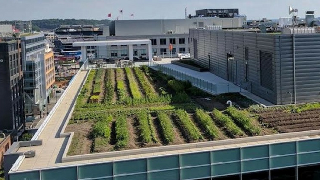 Up Top Acres: Rooftop Farming project video thumbnail