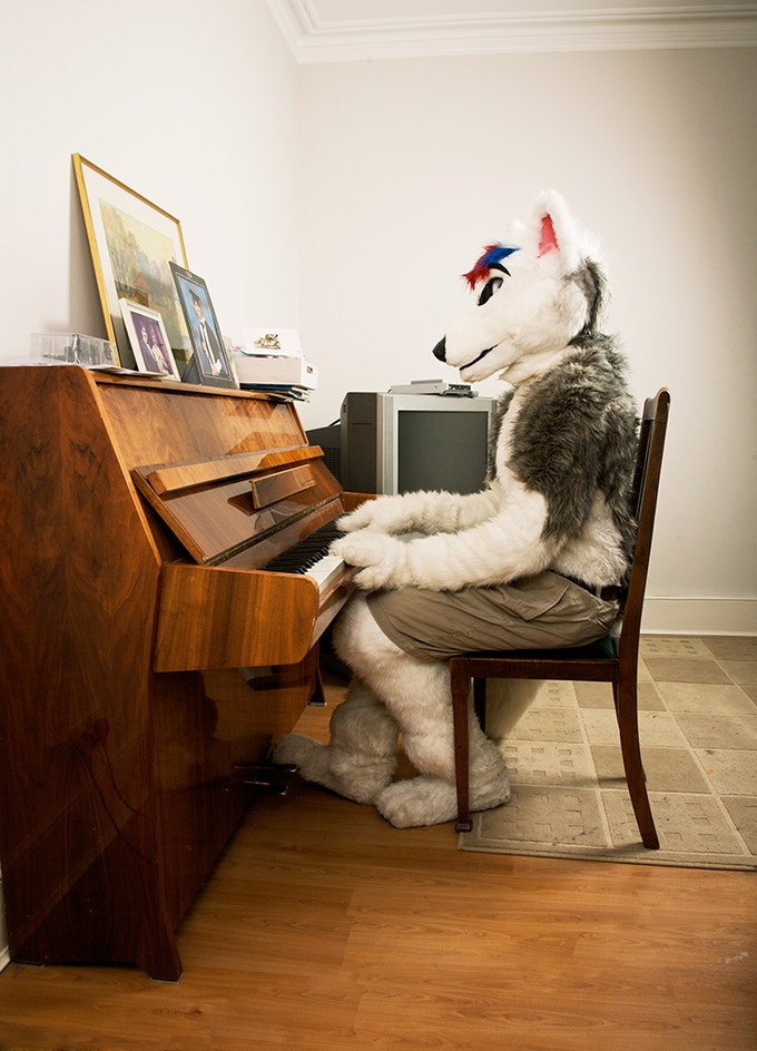 Smirnoff, a husky wolf at home in North London