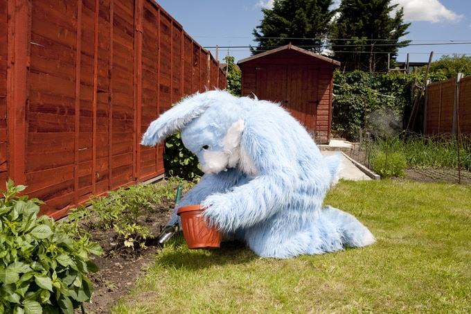 Bhavvels Bunny in his garden, East London (Limited edition print)