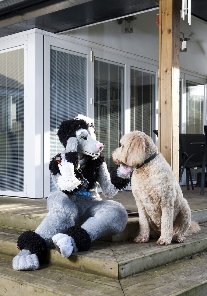 """""""It's not about why, it's about why not"""" Edward Fuzzypaws, a poodle at home in Richmond (1 of 4 postcards)"""
