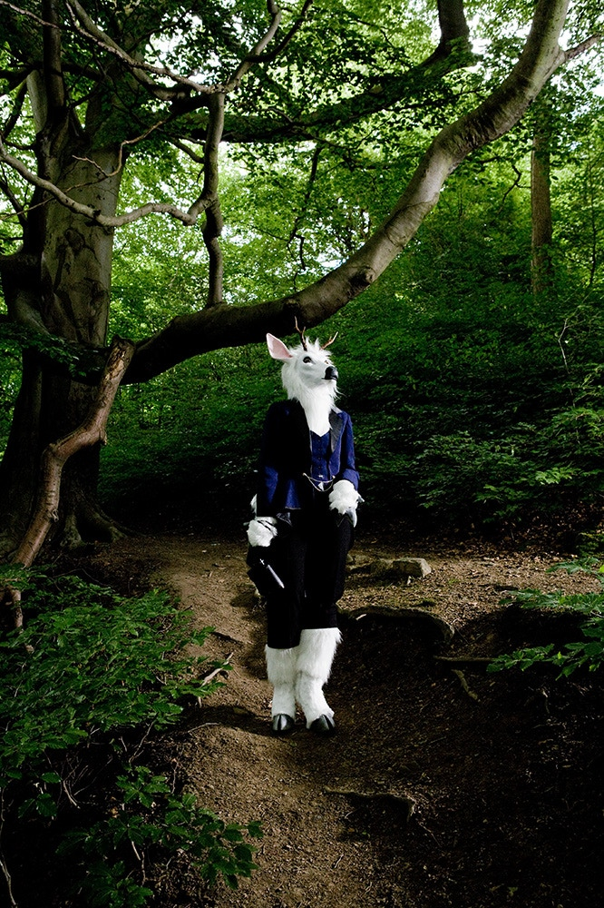Moon, a deer in her local woods, Sheffield (4 of 4 postcards)