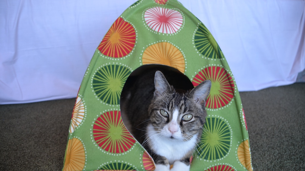 Beautiful cat beds project video thumbnail