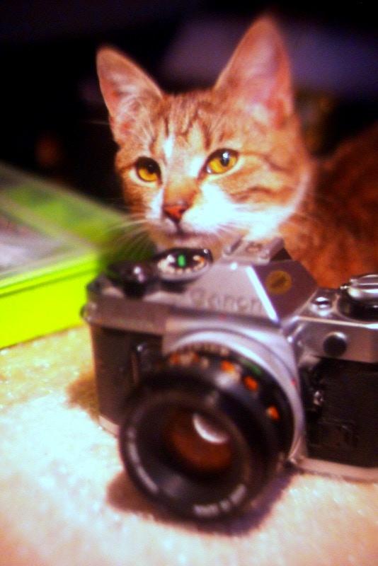 Nikon FE 50mm 1.2 + I'm Back®